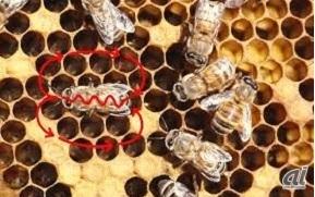 出典:Bee Tidings